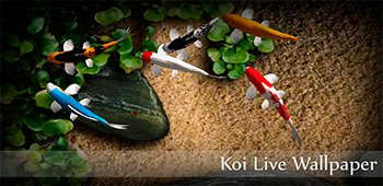 Постер Koi Live Wallpaper